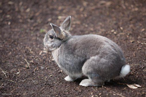 グレーのウサギの横姿
