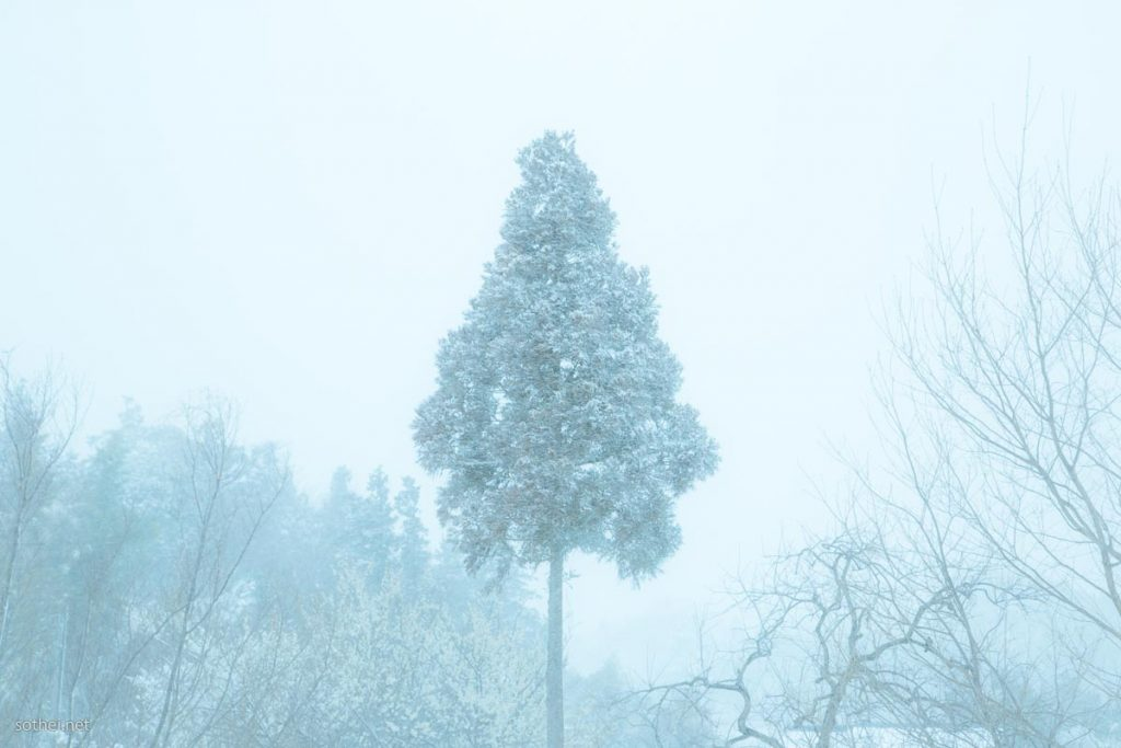 吹雪の中のクリスマスツリー