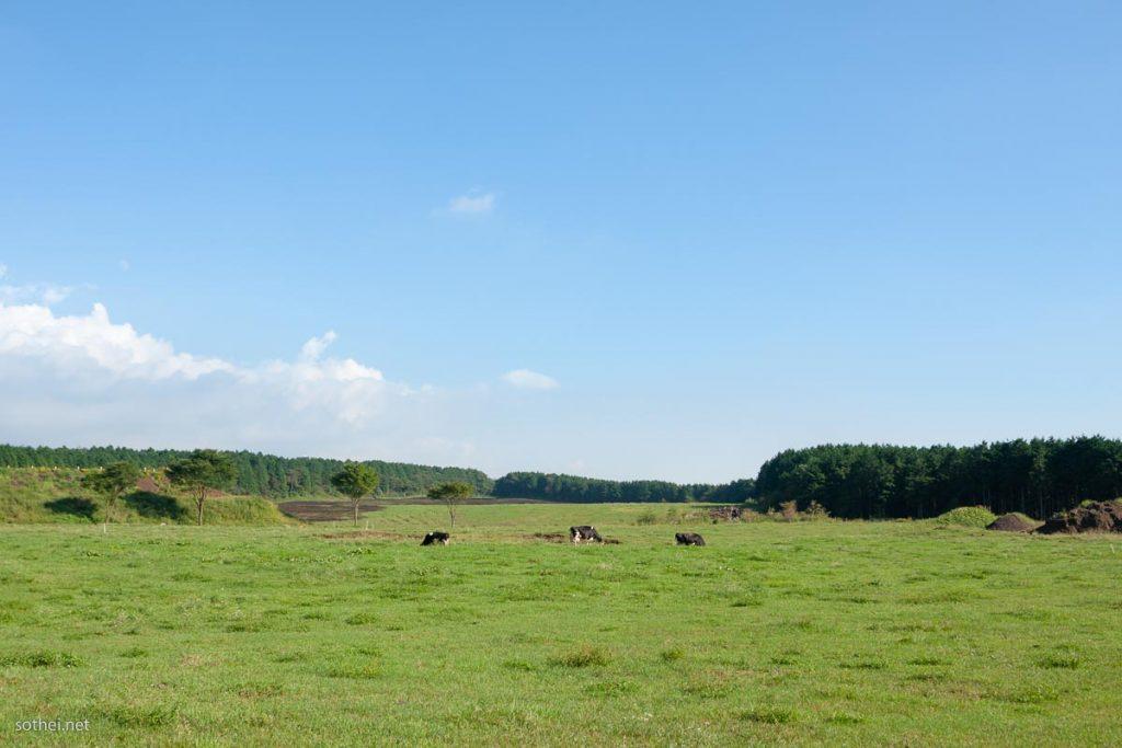青空の下の牛