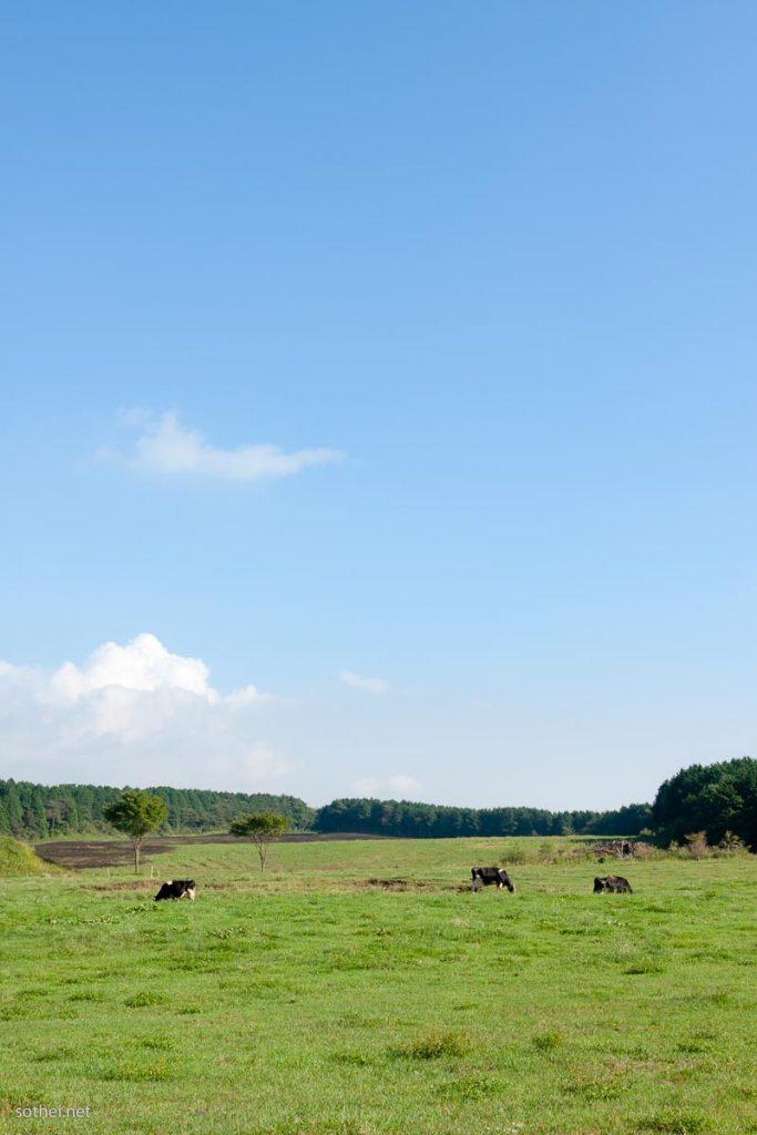青空の下の牛(縦)