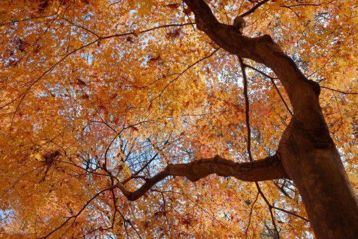 紅葉した葉と幹