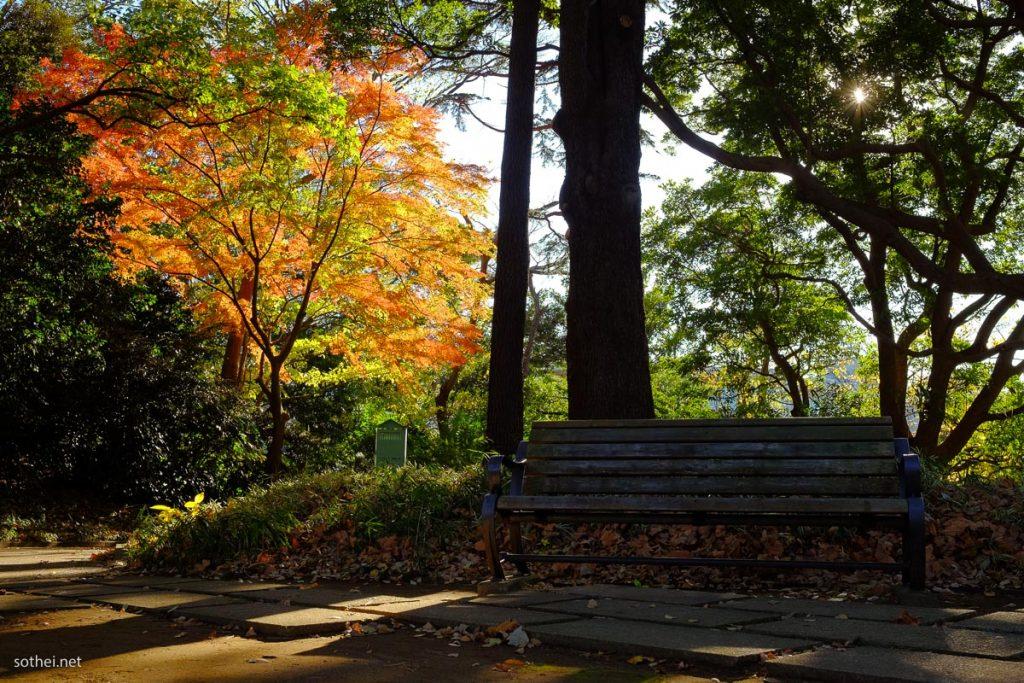港の見える丘公園の紅葉