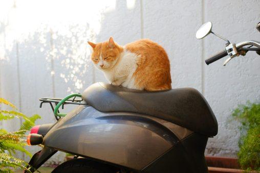 スクーターに座る猫