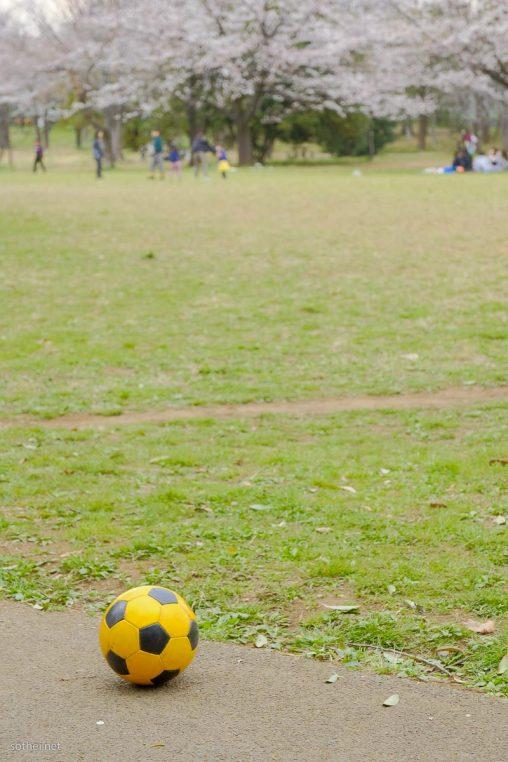 サッカーボールと満開の桜
