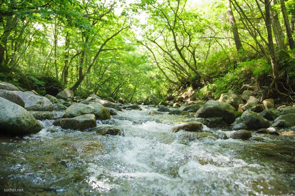 森林浴のできる川
