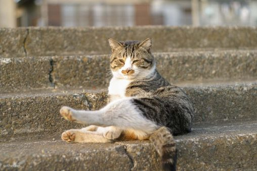 女座りの猫