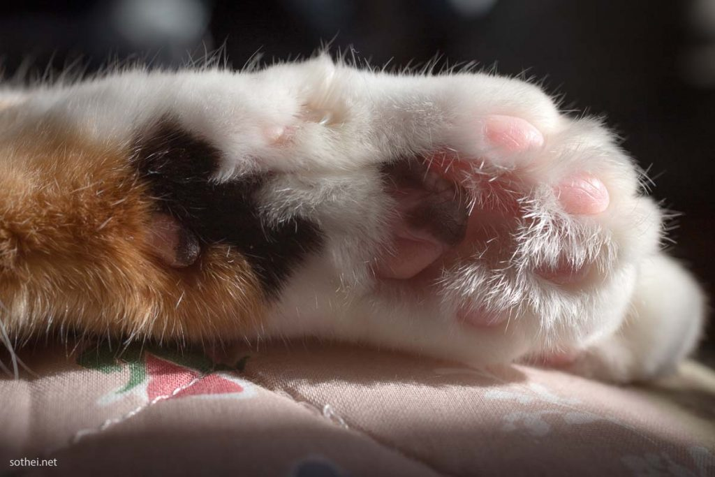 三毛猫の手