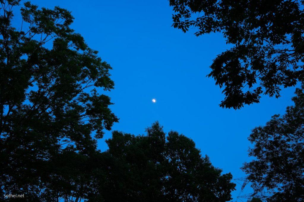森からの月