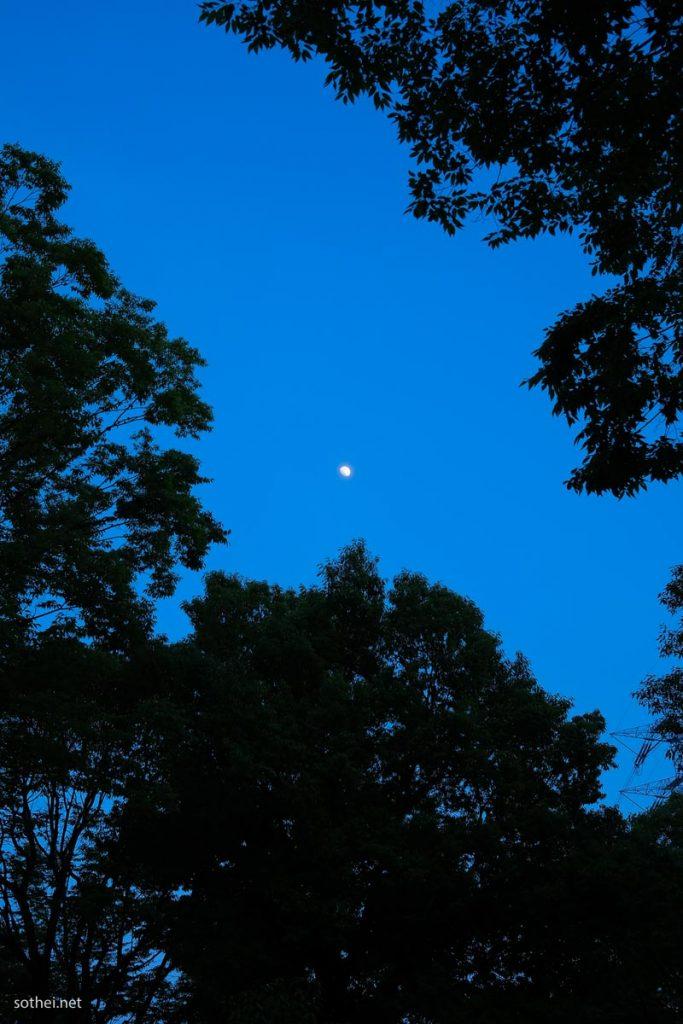 森からの月(縦位置)
