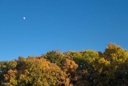 上弦の月と紅葉