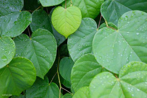 ハートマークの葉っぱ