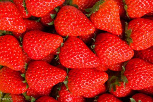 たくさんの苺の実